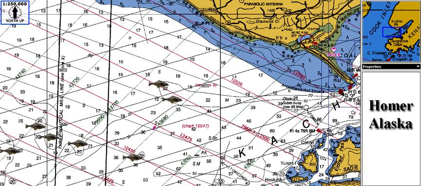 Homer Alaska Map Area.Homer Alaska Halibut Fishing Map Squidpro Tackle S Halibut Fishing