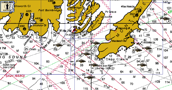 Montague Island Alaska Map Montague Island Alaska Fishing Map | SquidPro Tackle's Halibut